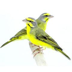 Tropische Vogels