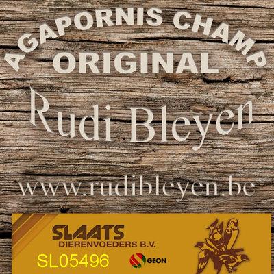 Agapornis Champ Original ES Rudi Bleyen